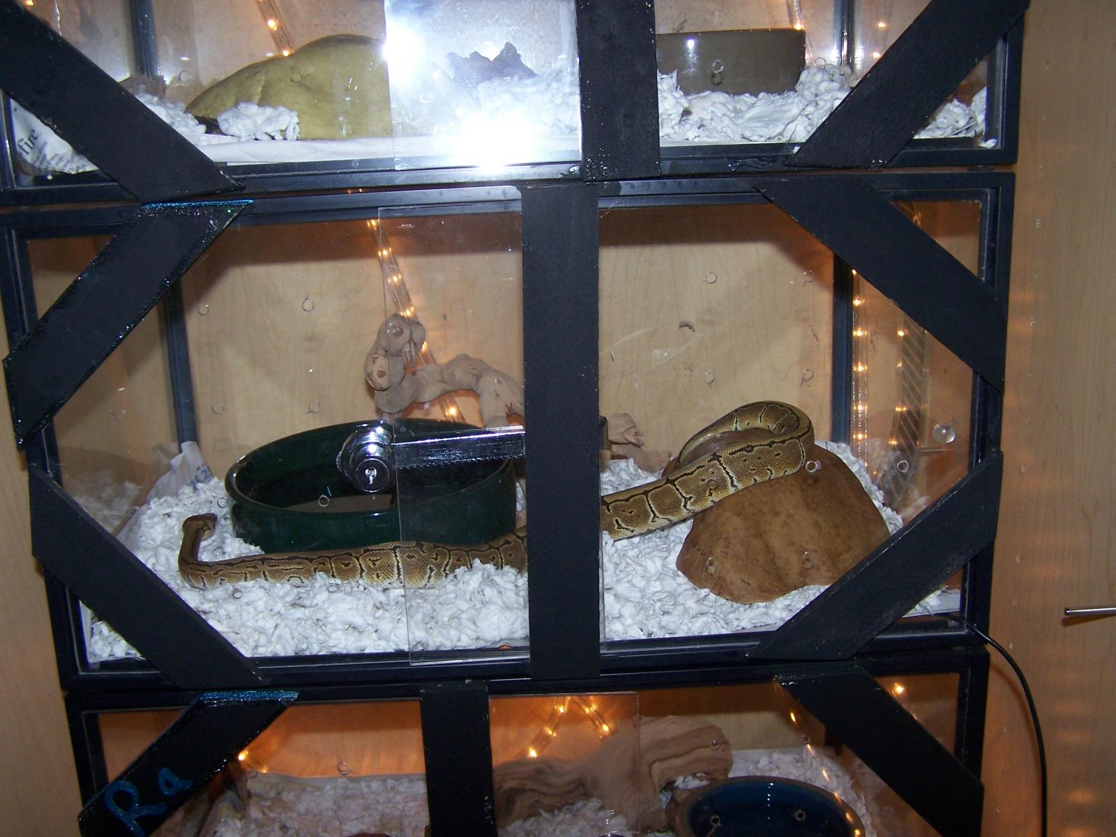 Custom Ball Python Enclosure Images amp Pictures Becuo