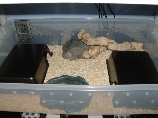what size of tank should i get my new baby ball python yahoo answers. Black Bedroom Furniture Sets. Home Design Ideas