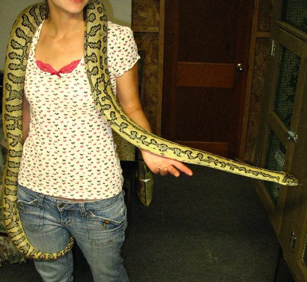 How Big Do Jungle Jaguar Carpet Pythons Get - Carpet ...