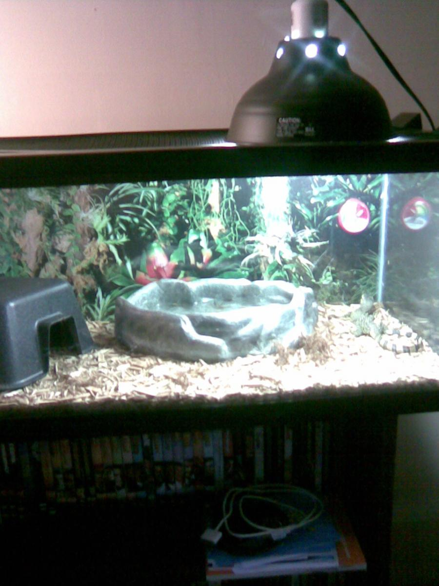 how to give water to a ball python